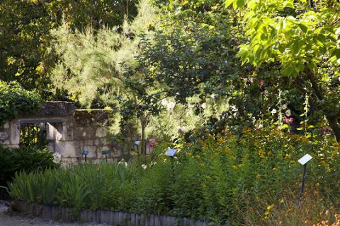 Le Coudray-Macouard_jardin botanique©J.-P. Berlose