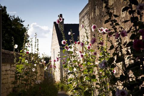 Le Coudray-Macouard_rue avec roses trémières©J.-P. Berlose