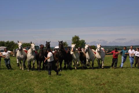 concours_chevaux_trait©cdc-pays-bellemois.jpg